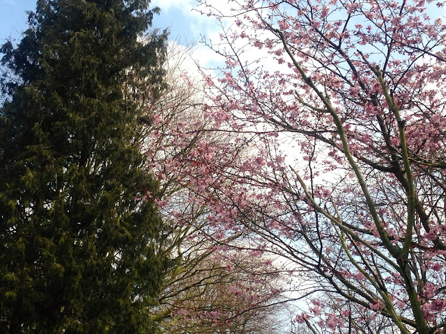 5 Things - Spring