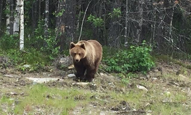 Что делать, если вы встретили медведя?