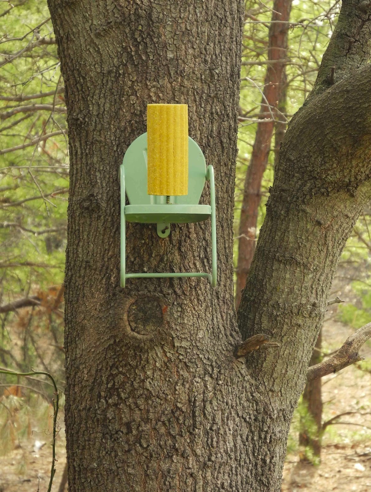 squirrel chair feeder thomas potty mothercare birds and words our bird buffet
