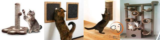 O melhor arranhador para gatos: dicas e como escolher