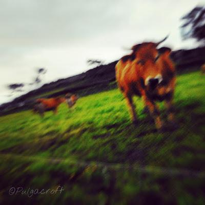 Vaca- Oblicow ©SandraSánchez