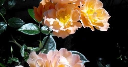 Nunu S Garn Und Stofflabor Heute Nur Ein Gedicht