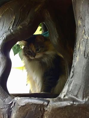 Hidden Hollow Cat Trees