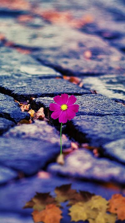 Flower Wallpaper IPhone 7 Plus