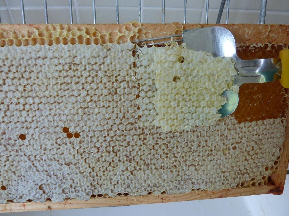 tout savoir sur l 39 extraction du miel un rucher au jardin. Black Bedroom Furniture Sets. Home Design Ideas