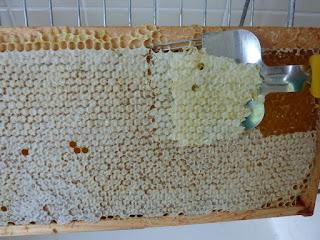 Fourchette pour retirer les opercules du miel