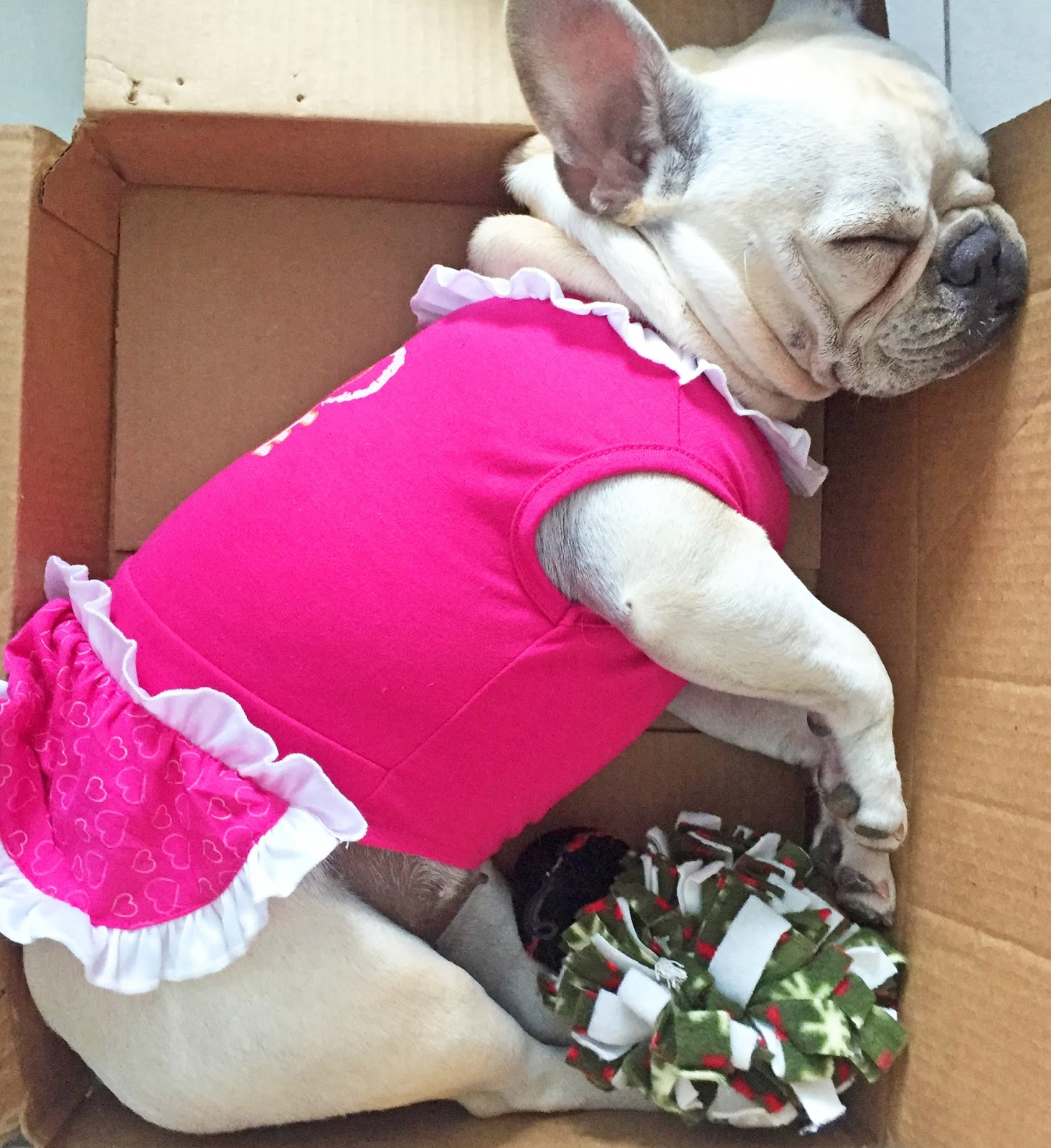 Adorable frenchie all dressed up!