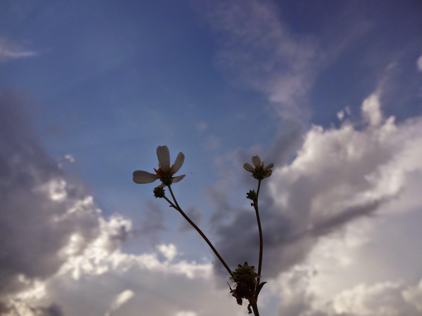 Bạn mơ ước mình sẽ dần trở nên hạnh phúc hơn...