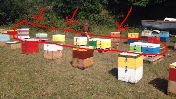 Όταν έφτασε στο μελισσοκομείο του είδε κάτι που δεν το περίμενε: Ήταν γεμάτο ξένες κυψέλες!