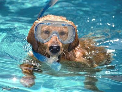 Kiểu bơi chó an toàn cho trẻ nhỏ