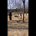 VIDEO: Banda de gatos ataca anciano y a su perro
