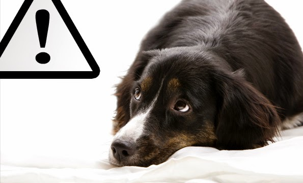 Common Dog Poisons