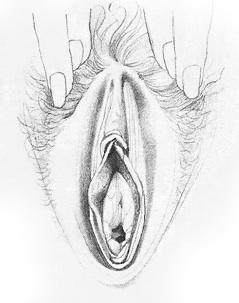 Жіночі статеві органи фото 2
