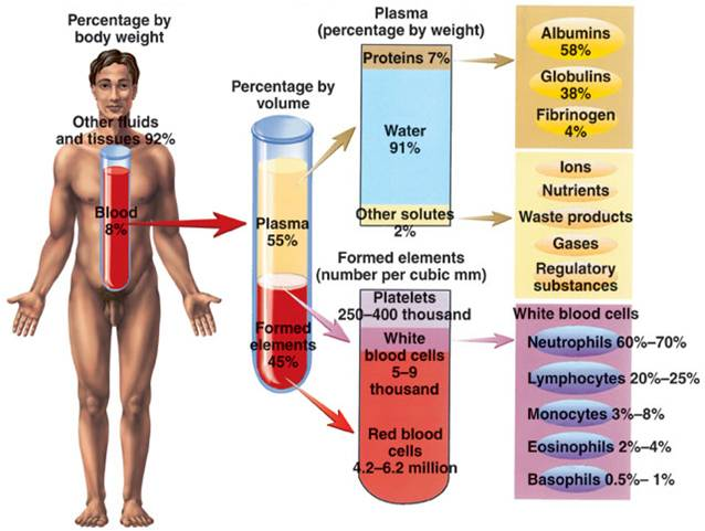 The characteristics of functions of blood in the human body
