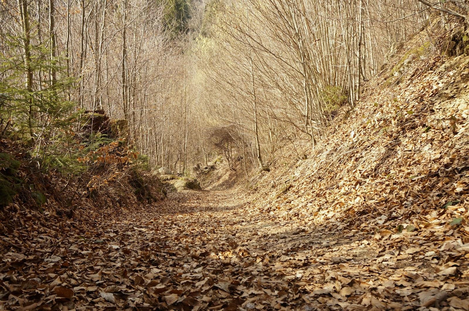 Rehabilitationsbericht nach Unfall_Foto Wald
