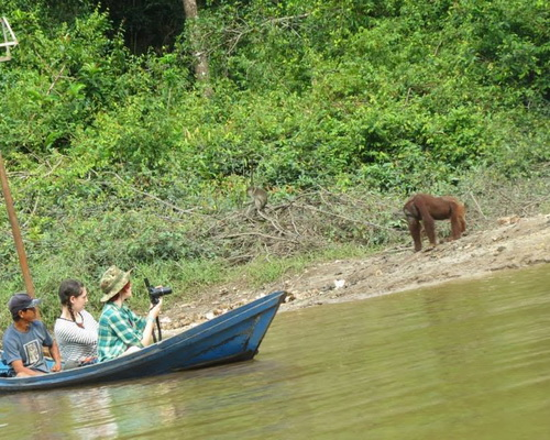 Travel.Tinuku.com Kahayan river cruise watch Borneo forests, orangutans, proboscis monkeys and traditional Dayak villages