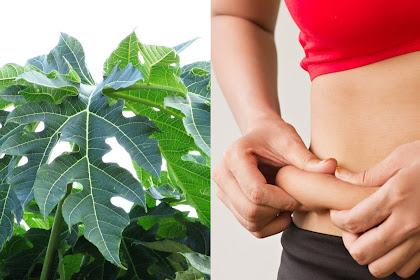 Manfaat daun Pepaya, mampu kecilkan perut secara alami