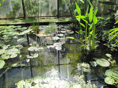 water lilies in glass house at the International garden festival at Chaumont-sur-Loire