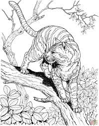 Tiger At Three Coloring Pages For Print