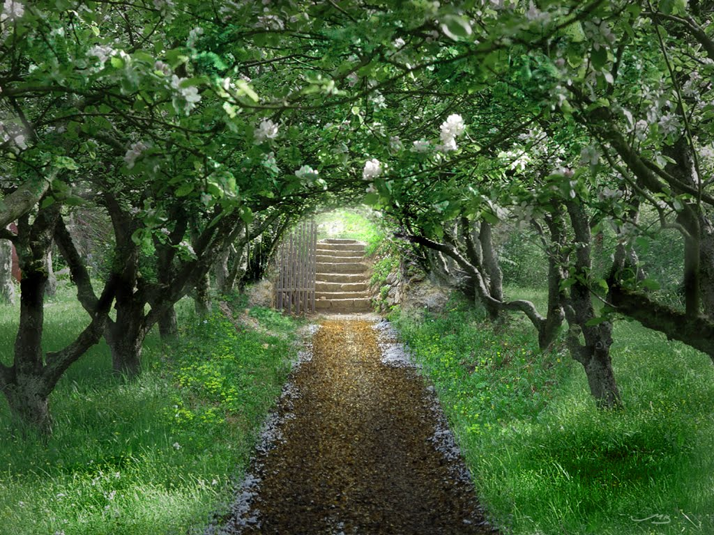 Secret Garden: My Galician Garden: An Orchard