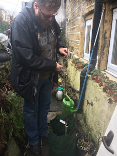 Man pruning apple tree