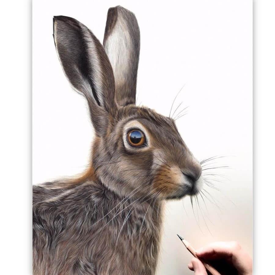 01-Hare-Claire-Milligan-www-designstack-co