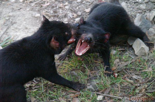 U Mad? Blog: MadBizarrice: Demônio Da Tasmânia