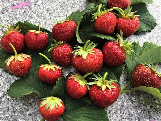 Erdbeeren Wädenswil 6