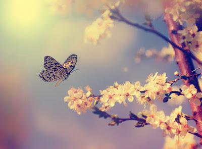 Resultado de imagen de mariposas volando