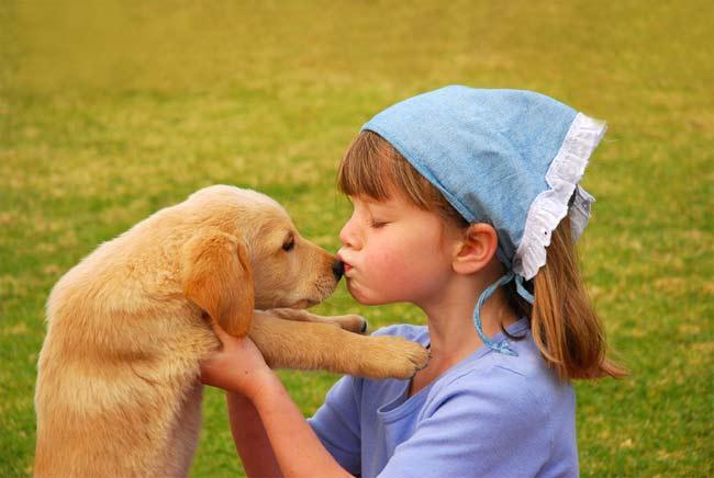 10 Hal Tentang Anjing Yang Belum Diketahui Horas