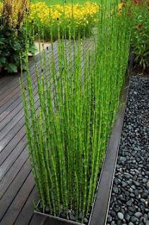<img scr='nama_file_gambar.jpg'  alt='Tanaman Hias Air Bambu Air' />