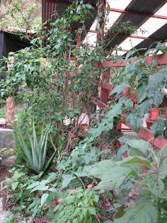 garden plants in Puriscal