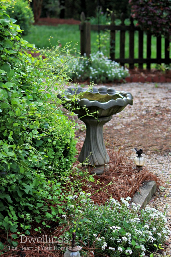 Bird Bath and Candytuft