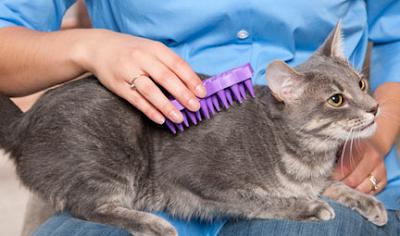 Kediler Neden Taranır