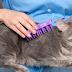 Yaz Ayında Kedi Bakımı için 8 Öneri
