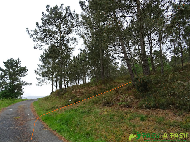 Ruta de los Castros: Desvío al bosque bajo el Penácaros