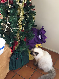 Princess looking at Christmas tree