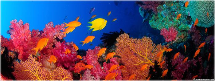 vida marinha - extinção em massa