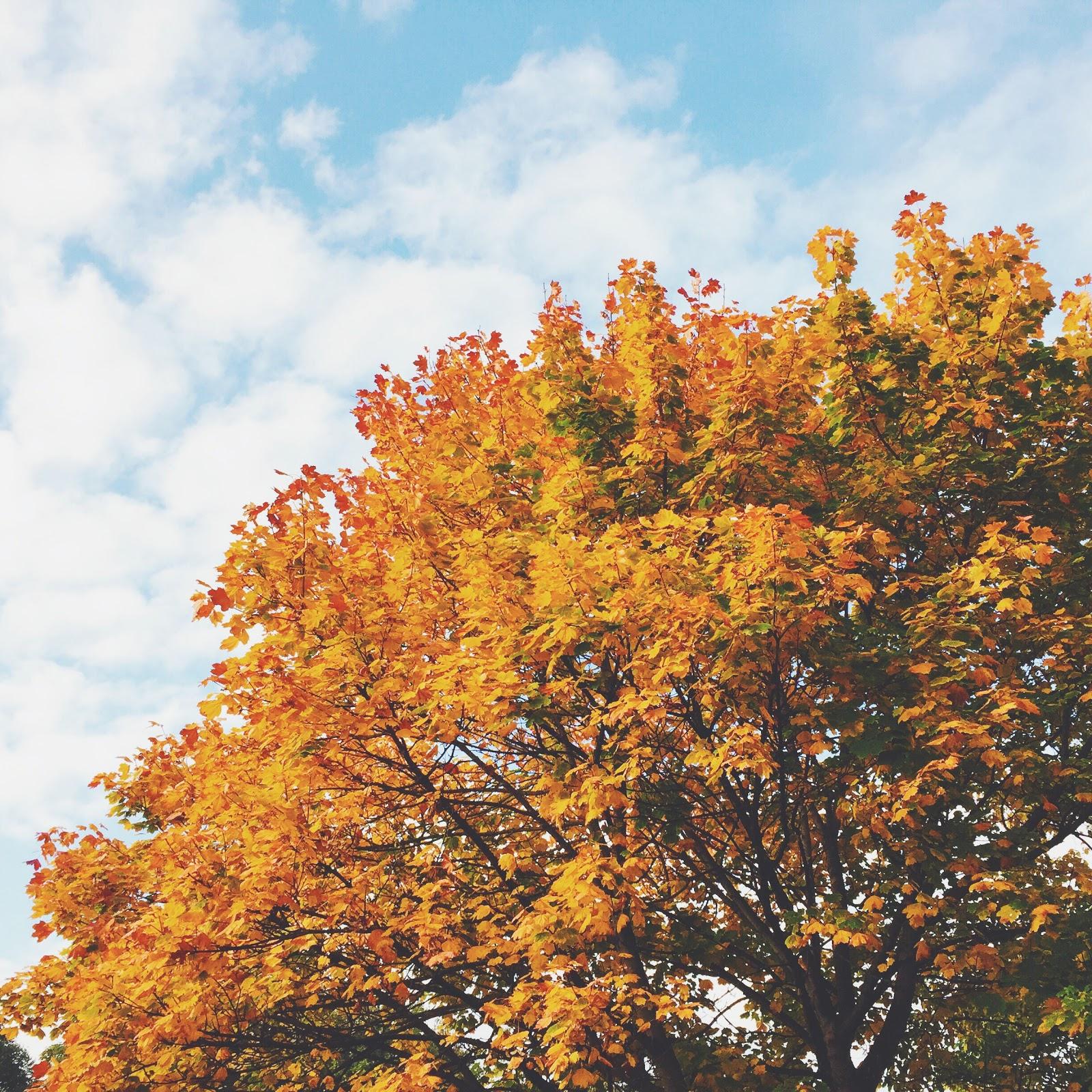 autumn leaves england