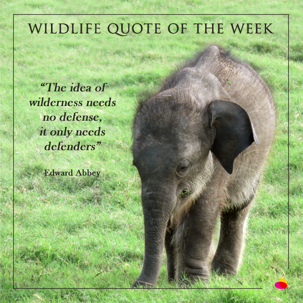 Elephant Quotes Stunning Wildlife Quote Of The Week Sri Lanka Nature Wildlife Travel Blog