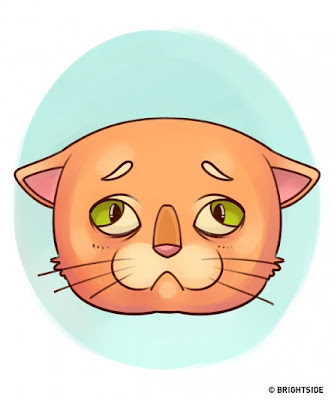 Thông thường, mèo chỉ có 3 mí mắt khi chúng buồn ngủ.