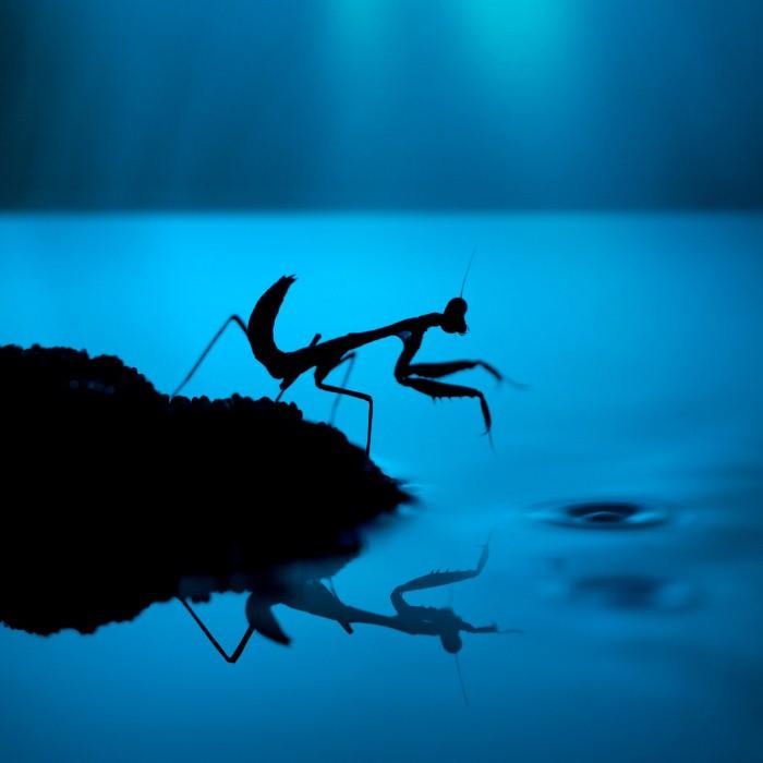 Необычные фотографии насекомых 16