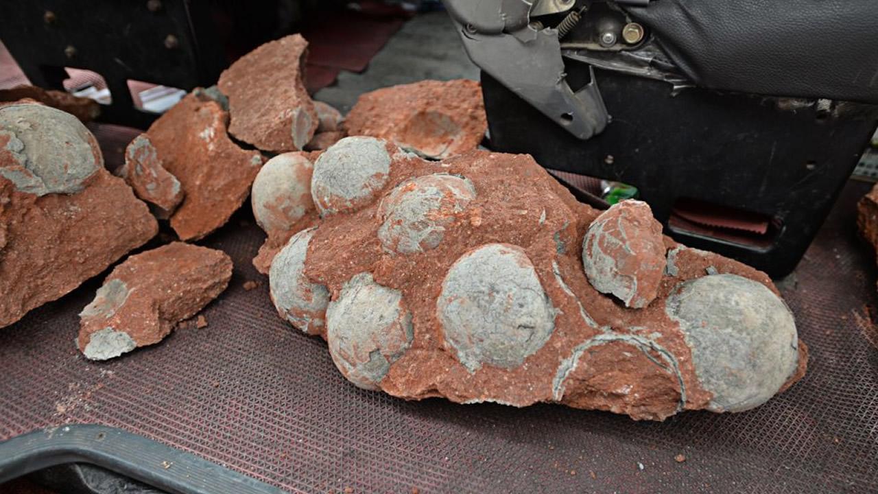 Encuentran Huevos de Dinosaurio de 70 millones de años en China