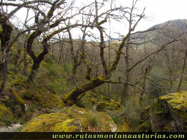 Vegetación y líquenes en el cañón del Cárdena