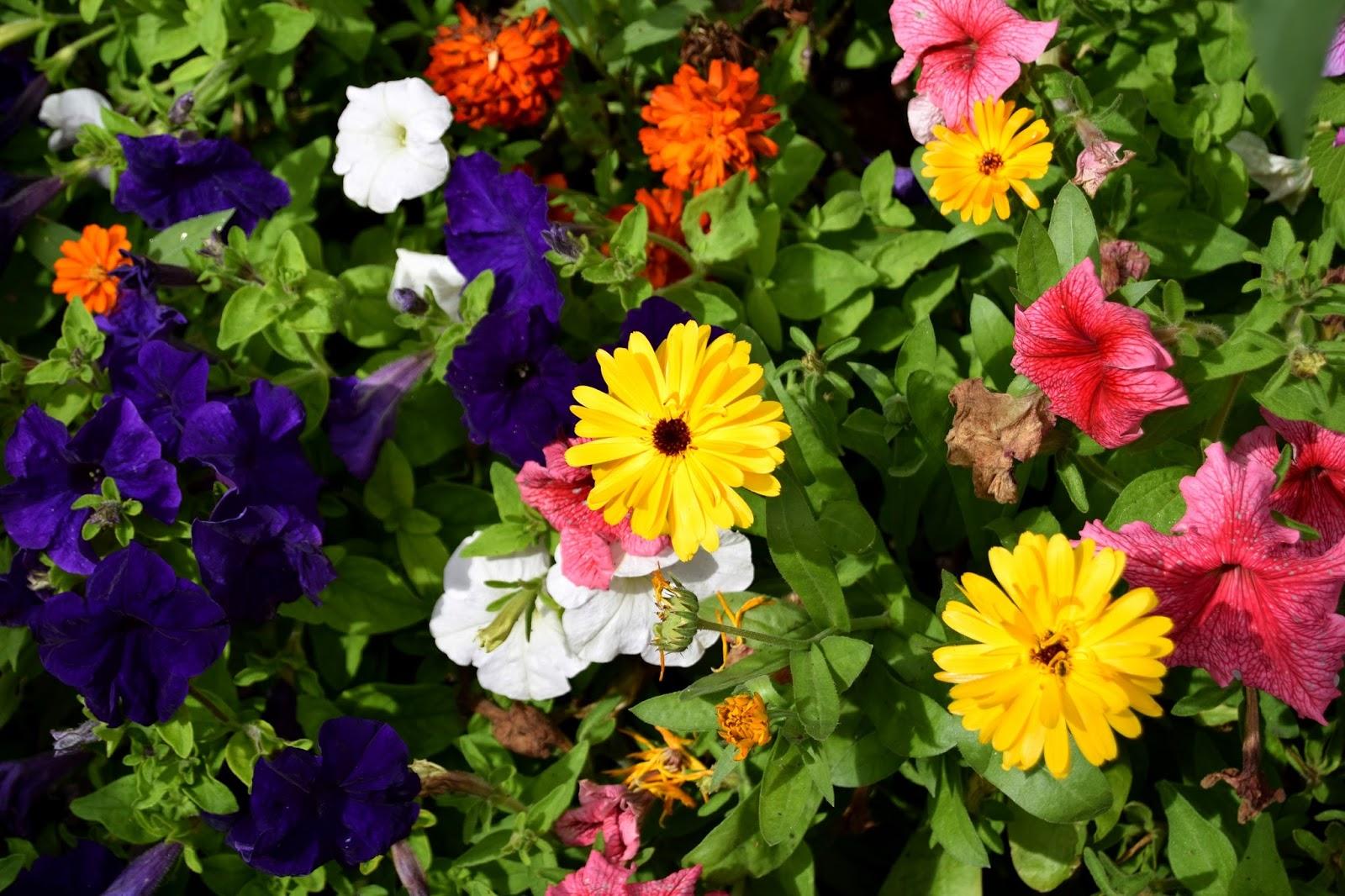 Bakewell flowers