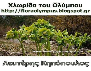 Flora Olympus