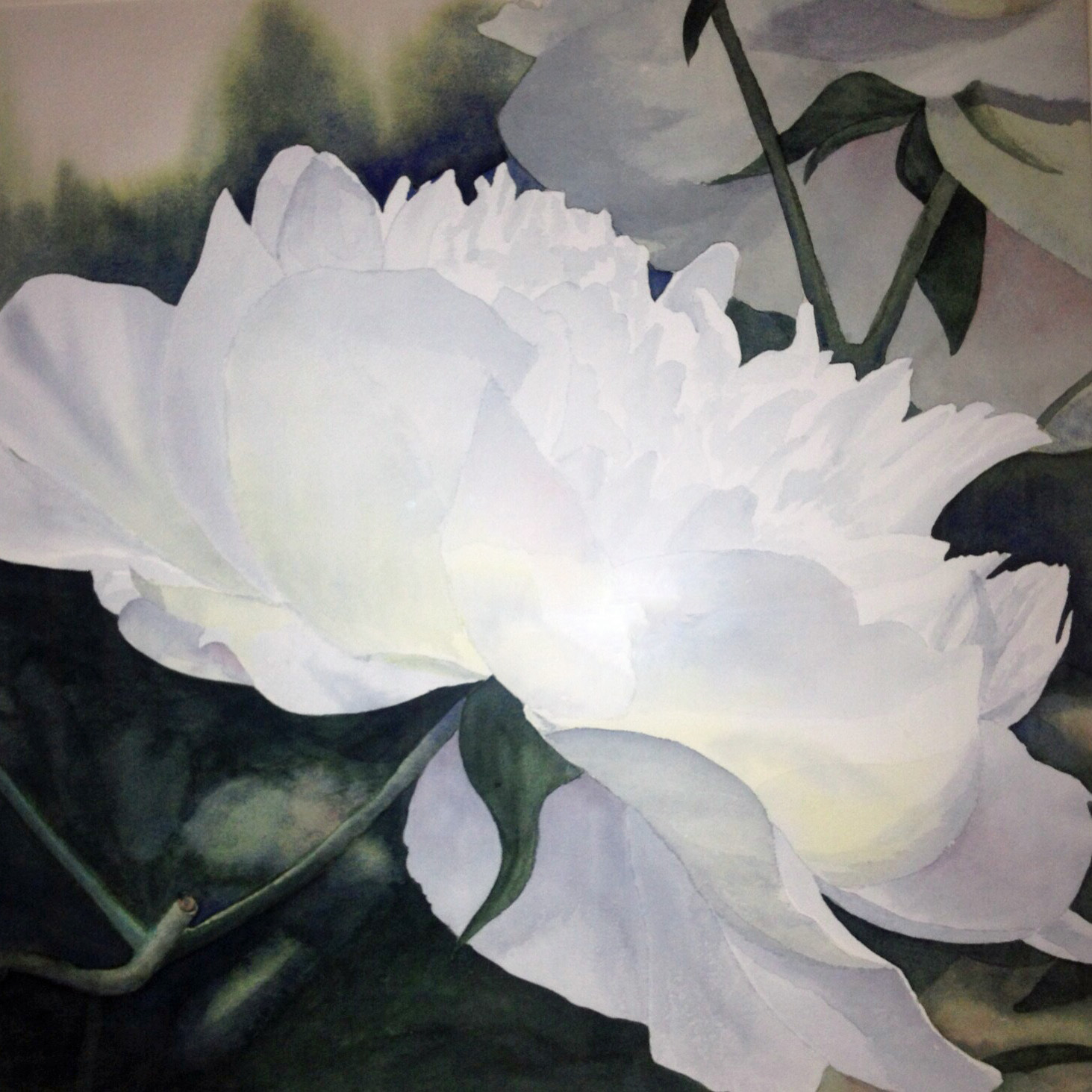 Southern Peony Questions
