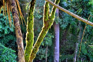 Sun illuminating moss covered tree