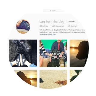 screenshot instagram balu from the blog labrador