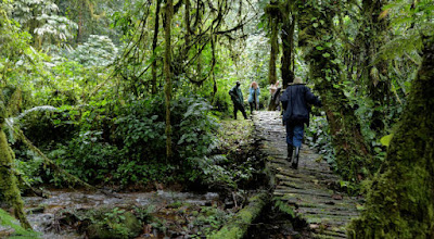 THE FOREST TRAILS IN BWINDI IMPENETRABLE FOREST NATIONAL PARK